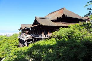 5月春,清水の舞台-新緑の清水寺-の写真素材 [FYI01779403]