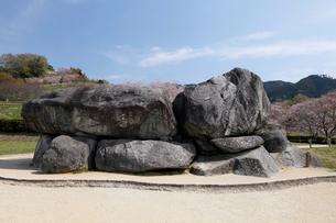 4月 桜の石舞台-飛鳥の古代石造物の写真素材 [FYI01779406]