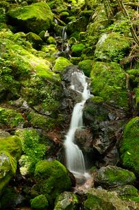 7月の四万十川源流点 四国の水景色の写真素材 [FYI01779416]