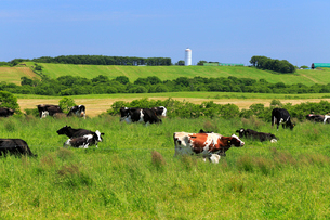 7月,北海道根釧台地の酪農風景の写真素材 [FYI01779424]