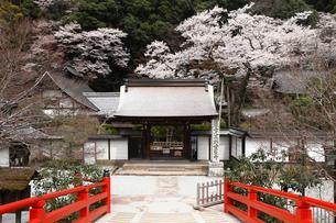 4月 桜の室生(むろう)寺 奈良の春景色の写真素材 [FYI01779430]