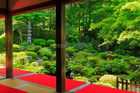 5月新緑,大原三千院の日本庭園の写真素材 [FYI01779431]