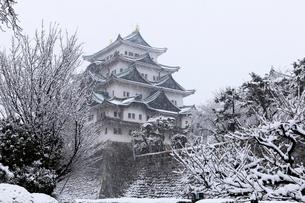 2月冬,雪の名古屋城の写真素材 [FYI01779433]