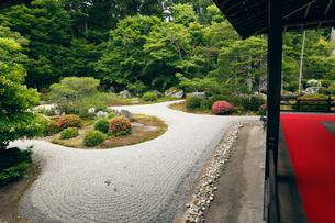 6月初夏 サツキの曼殊院 京都の庭園美の写真素材 [FYI01779438]