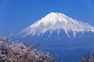 4月春,青空に映える残雪の富士山と雁公園の満開の桜の写真素材 [FYI01779467]