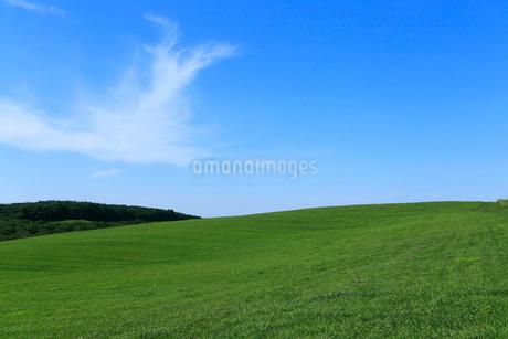 7月 北海道 根釧台地の青空と緑の草原 の写真素材 [FYI01779490]