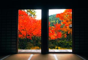 11月 紅葉の西明寺 -京都高雄-の写真素材 [FYI01779528]