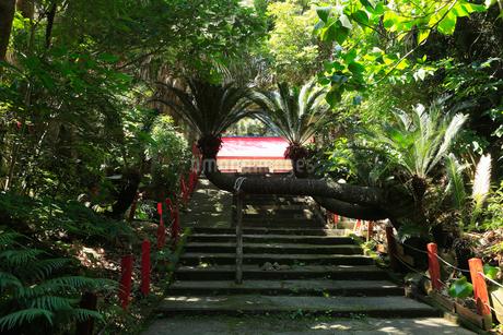 6月 初夏 鹿児島県佐多岬の御崎神社の写真素材 [FYI01779530]