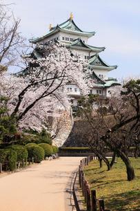 4月春,桜の名古屋城天守閣の写真素材 [FYI01779537]