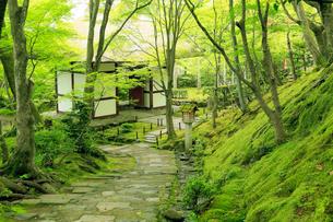 5月春,新緑の常寂光(じょうじゃっこう)寺-京都嵯峨野の古刹-の写真素材 [FYI01779538]