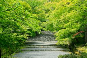 5月,新緑の二尊院-京都嵯峨野の古刹-の写真素材 [FYI01779541]