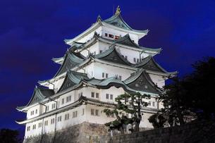 8月夏,ライトアップされた名古屋城天守閣の写真素材 [FYI01779550]