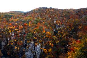 11月 紅葉の鳴子峡 東北の秋の写真素材 [FYI01779560]