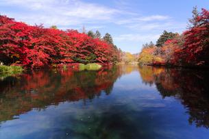 10月 紅葉の雲場池 軽井沢の秋の写真素材 [FYI01779564]