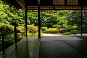 6月 サツキの詩仙堂の写真素材 [FYI01779580]