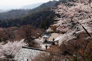 4月 桜の善峯(よしみね)寺 京都の春景色の写真素材 [FYI01779588]