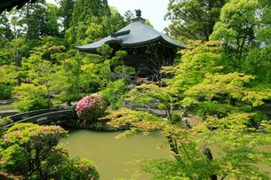 5月,新緑の清涼寺-京都嵯峨野の古刹-の写真素材 [FYI01779592]