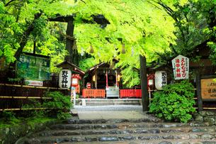 5月新緑,嵯峨野の野宮(ののみや)神社の写真素材 [FYI01779605]