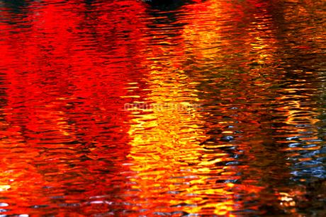 11月 紅葉の写り込み 秋彩の写真素材 [FYI01779607]