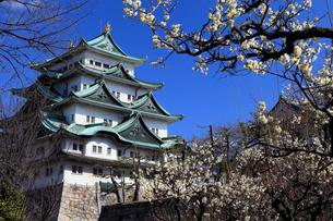 4月春,梅の名古屋城天守閣の写真素材 [FYI01779616]