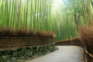 5月,新緑の竹林の道-京都嵯峨野の散策スポットの写真素材 [FYI01779620]