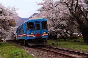 4月 桜の樽見鉄道-谷汲口駅(たにぐみぐちえき)-の写真素材 [FYI01779640]