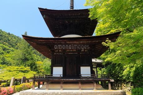 6月 サツキの善峯寺の写真素材 [FYI01779658]