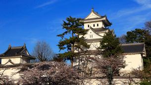4月 桜の大垣城天守閣の写真素材 [FYI01779671]