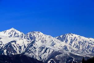 4月春,白馬村から見た残雪の北アルプスの写真素材 [FYI01779680]
