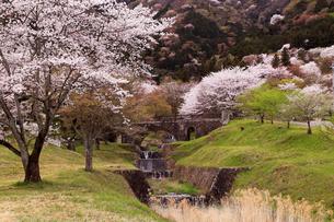 4月 桜の霞間ヶ渓(かまがたに)の写真素材 [FYI01779688]