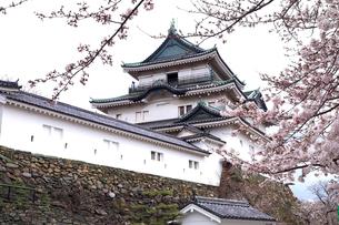 4月 桜の和歌山城 -紀州のサクラ-の写真素材 [FYI01779717]
