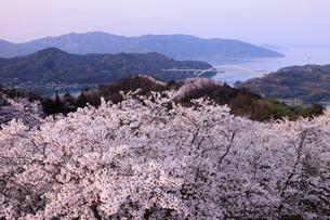 4月春,桜の開山(ひらきやま)公園-しまなみ海道の桜名所-の写真素材 [FYI01779722]