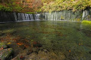 10月 紅葉の白糸の滝 軽井沢の秋の写真素材 [FYI01779733]