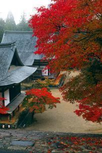 11月 紅葉の神護寺 京都の秋景色の写真素材 [FYI01779734]