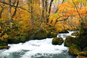 10月 紅葉の奥入瀬渓流- 東北の秋の写真素材 [FYI01779753]