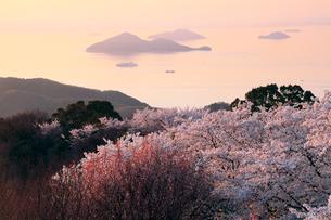 4月春,桜の紫雲出山(しうでやま)-瀬戸内海の桜名所-の写真素材 [FYI01779772]