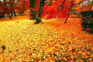 11月 紅葉の永観堂 京都の秋の写真素材 [FYI01779787]