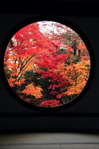 11月 源光庵の悟りの窓ごしに見る紅葉-京都の庭園美の写真素材 [FYI01779804]