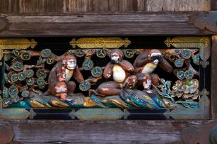 10月 日光東照宮の三猿(見ざる聞かざる言わざる)の写真素材 [FYI01779815]
