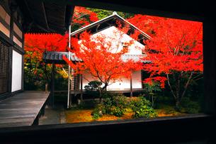 11月  紅葉の西明寺  京都高雄の写真素材 [FYI01779835]