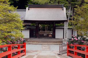 4月 シャクナゲの室生寺 奈良の春景色の写真素材 [FYI01779849]