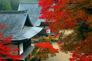 11月 紅葉の神護寺 京都の秋の写真素材 [FYI01779869]