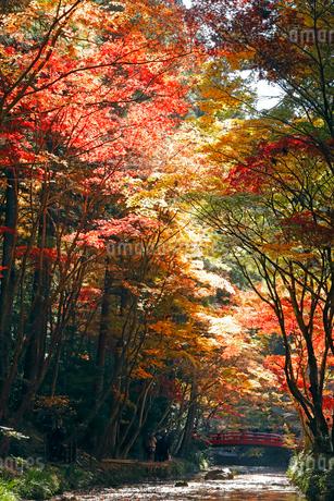 11月 紅葉の小国神社 秋彩の写真素材 [FYI01779870]