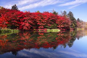10月 紅葉の雲場池 軽井沢の秋の写真素材 [FYI01779878]