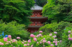 6月 アジサイ咲く岩船(がんせん)寺 初夏の京都の写真素材 [FYI01779883]
