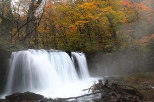10月 銚子大滝 紅葉の奥入瀬渓流 東北の秋の写真素材 [FYI01779902]