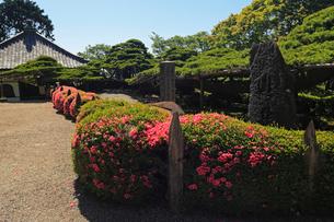 6月 サツキの善峯寺の写真素材 [FYI01779905]