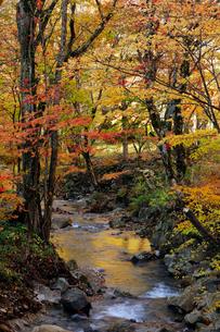10月 せせらぎ街道の紅葉 森林公園から大倉滝への写真素材 [FYI01779911]