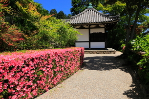 6月 サツキの善峯寺の写真素材 [FYI01779937]