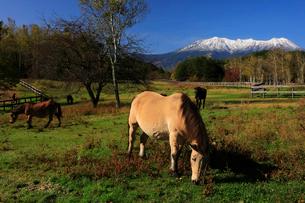10月 秋の木曽馬の里の写真素材 [FYI01779941]
